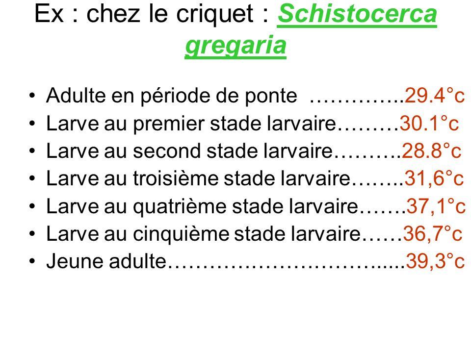 Ex : chez le criquet : Schistocerca gregaria