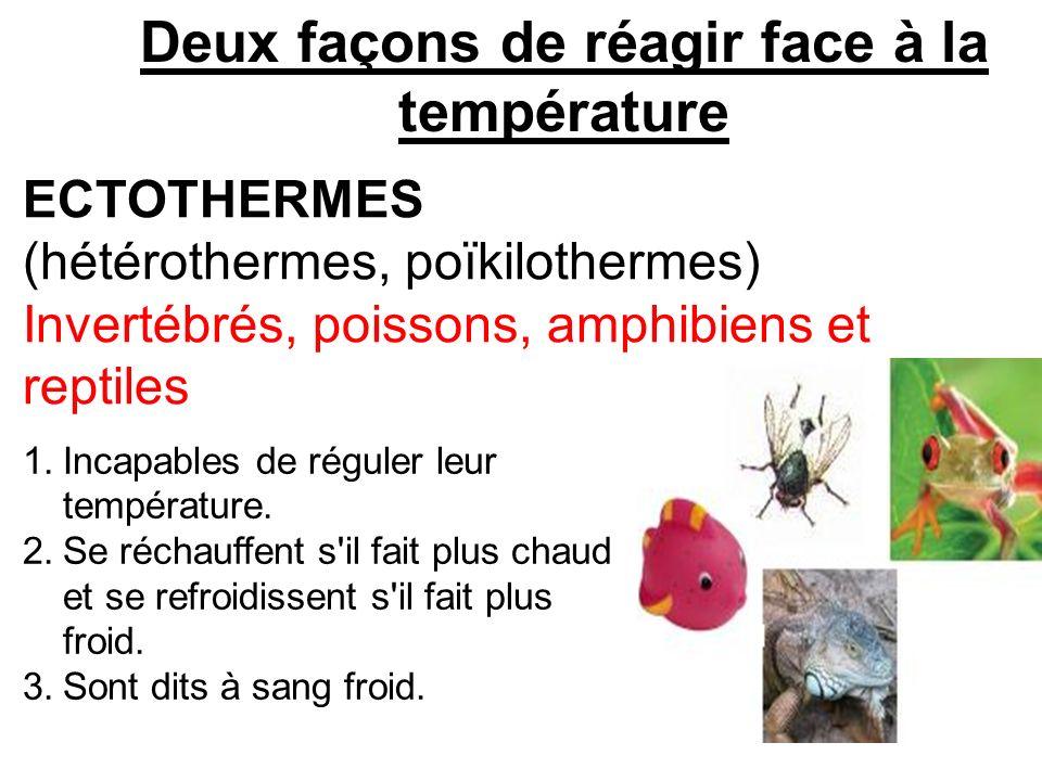 Deux façons de réagir face à la température