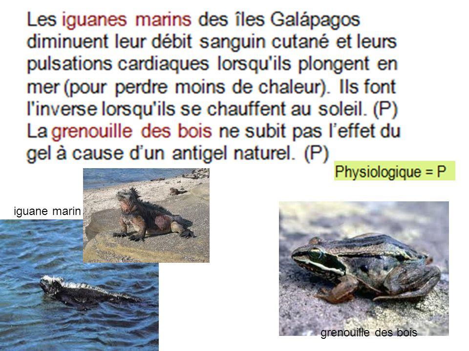 iguane marin grenouille des bois