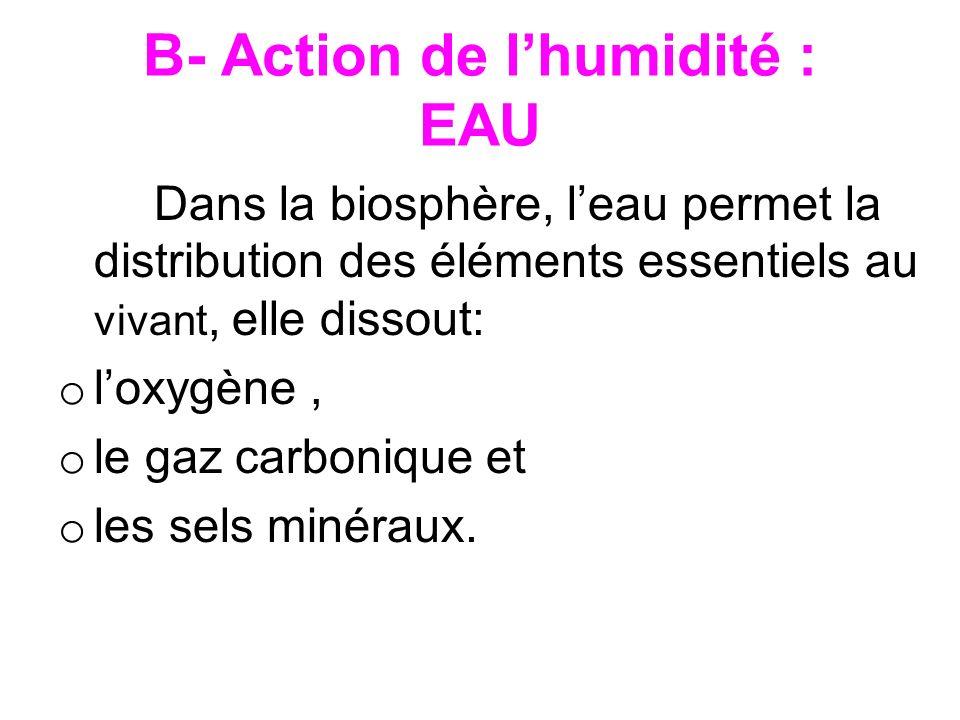 B- Action de l'humidité : EAU