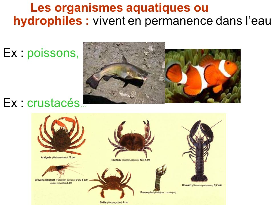 Les organismes aquatiques ou hydrophiles : vivent en permanence dans l'eau