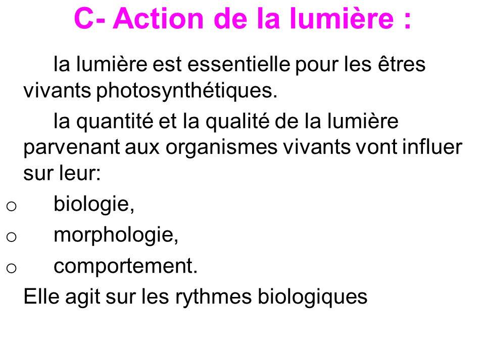 C- Action de la lumière :