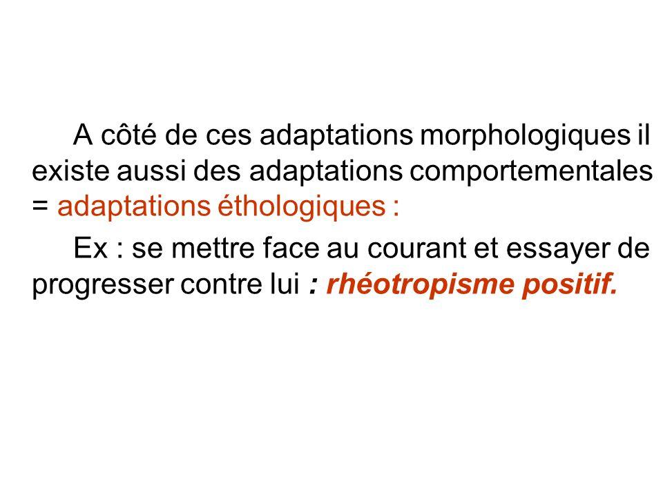 A côté de ces adaptations morphologiques il existe aussi des adaptations comportementales = adaptations éthologiques :