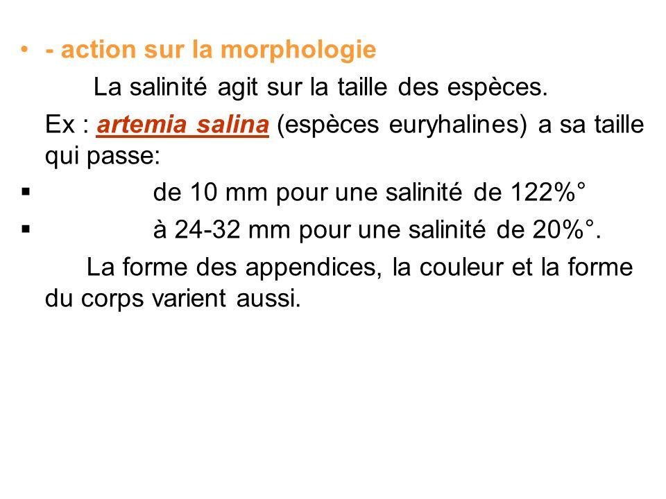 - action sur la morphologie