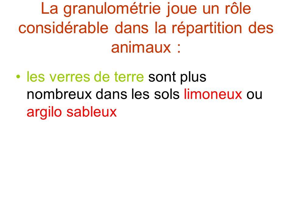 La granulométrie joue un rôle considérable dans la répartition des animaux :