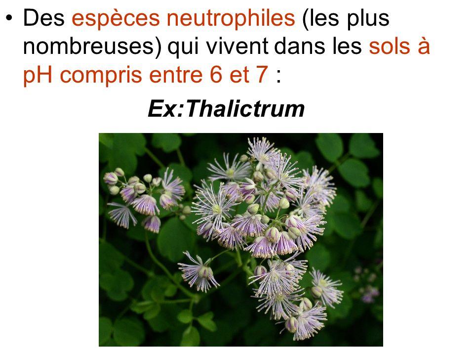 Des espèces neutrophiles (les plus nombreuses) qui vivent dans les sols à pH compris entre 6 et 7 :