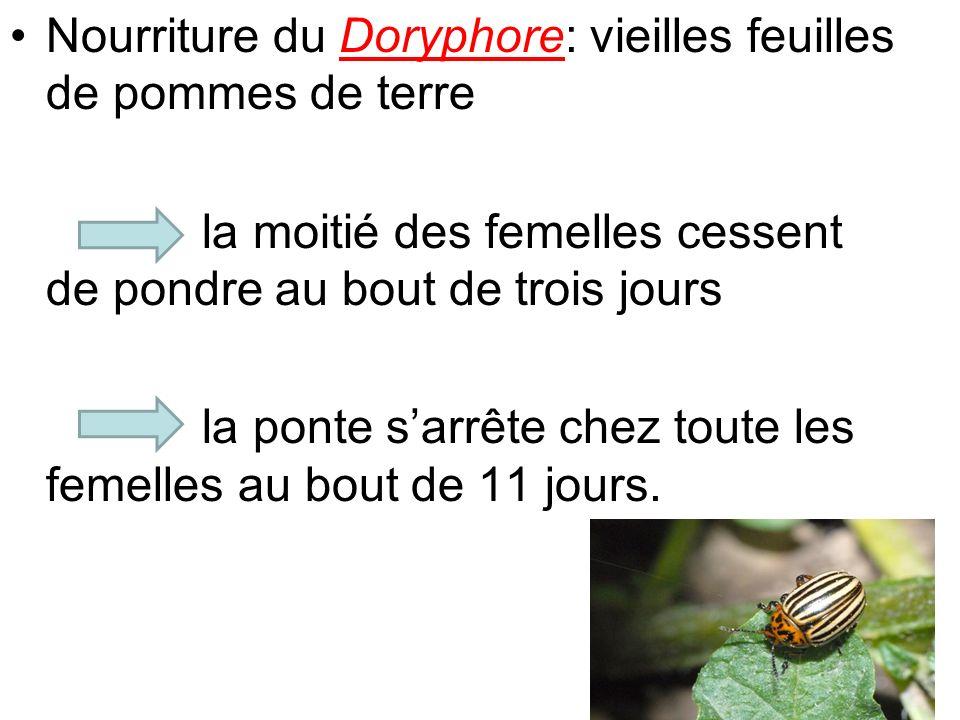 Nourriture du Doryphore: vieilles feuilles de pommes de terre