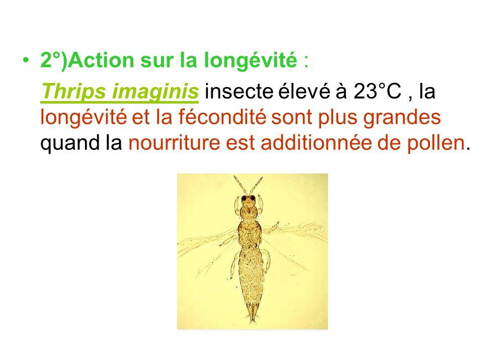 2°)Action sur la longévité :