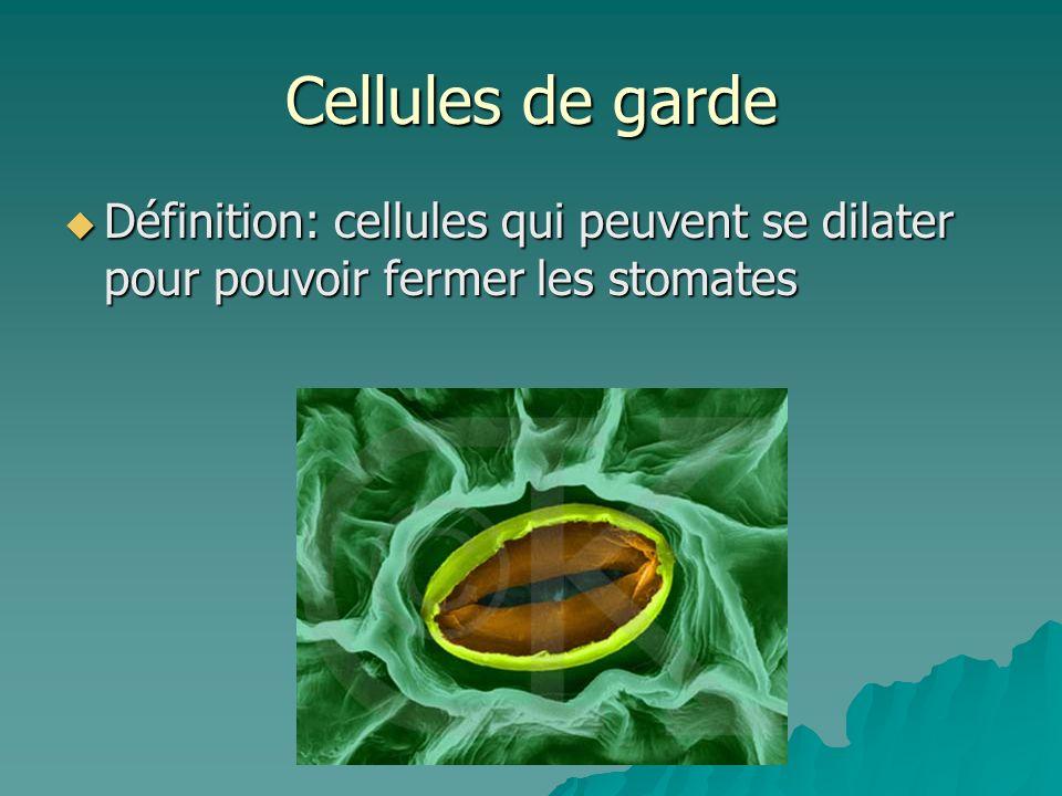 Cellules de garde Définition: cellules qui peuvent se dilater pour pouvoir fermer les stomates