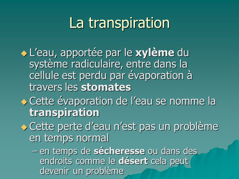 La transpiration L'eau, apportée par le xylème du système radiculaire, entre dans la cellule est perdu par évaporation à travers les stomates.