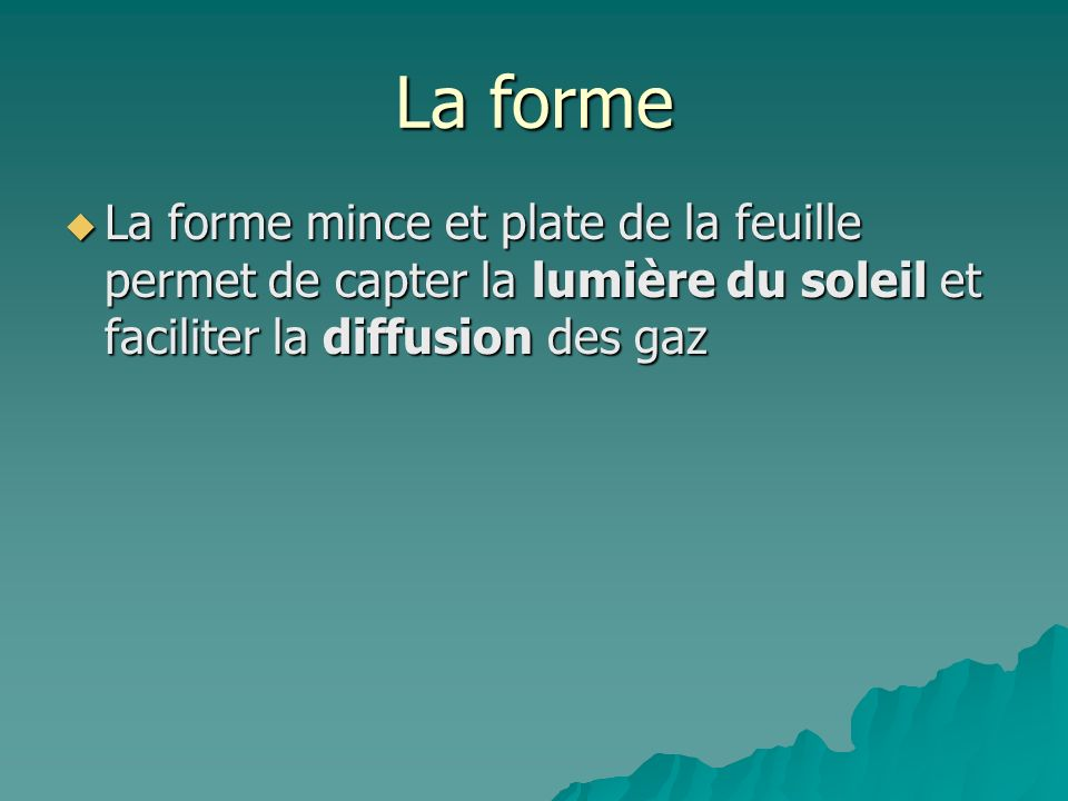 La forme La forme mince et plate de la feuille permet de capter la lumière du soleil et faciliter la diffusion des gaz.