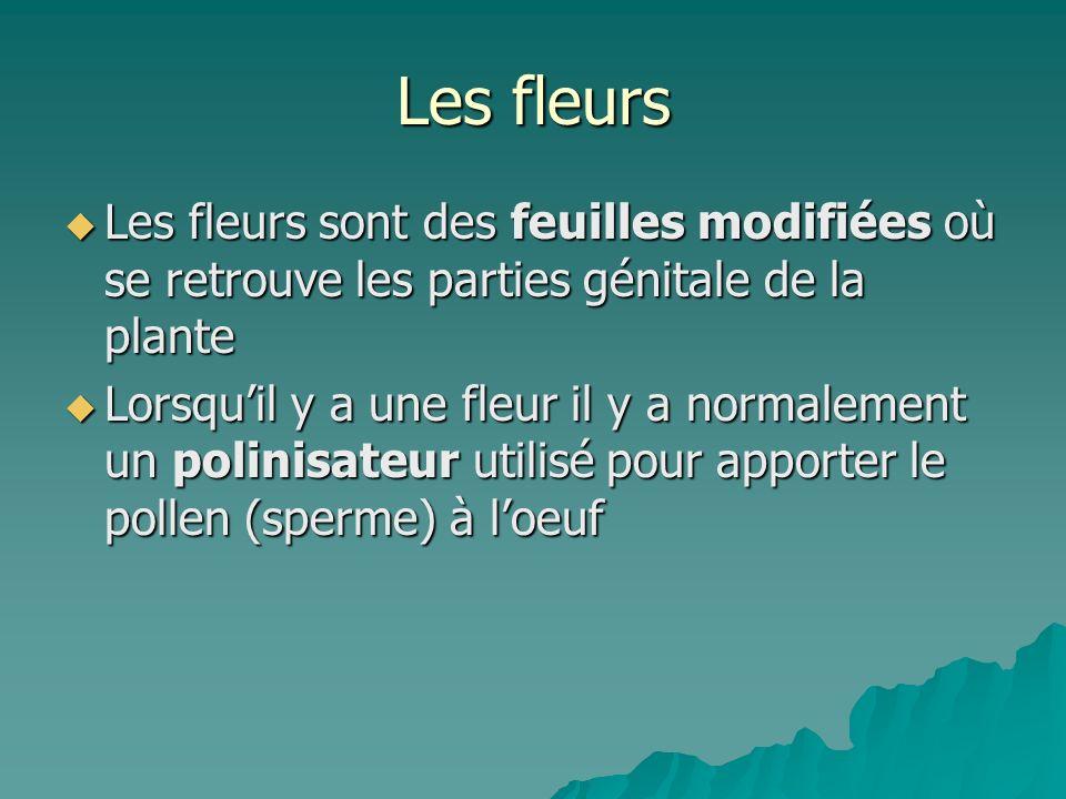 Les fleursLes fleurs sont des feuilles modifiées où se retrouve les parties génitale de la plante.