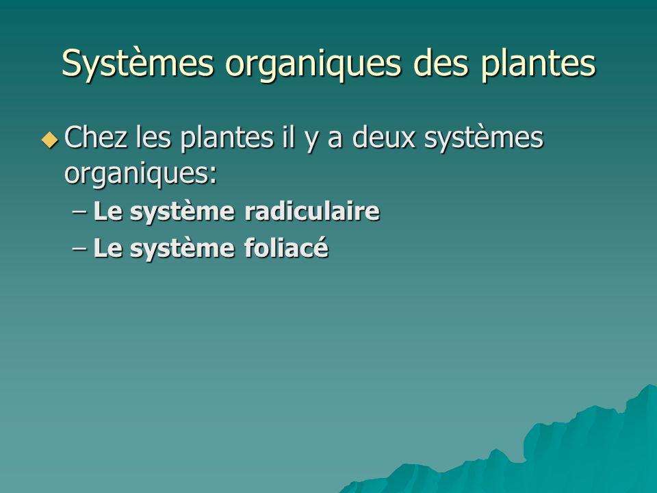 Systèmes organiques des plantes