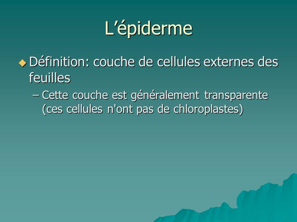 L'épiderme Définition: couche de cellules externes des feuilles