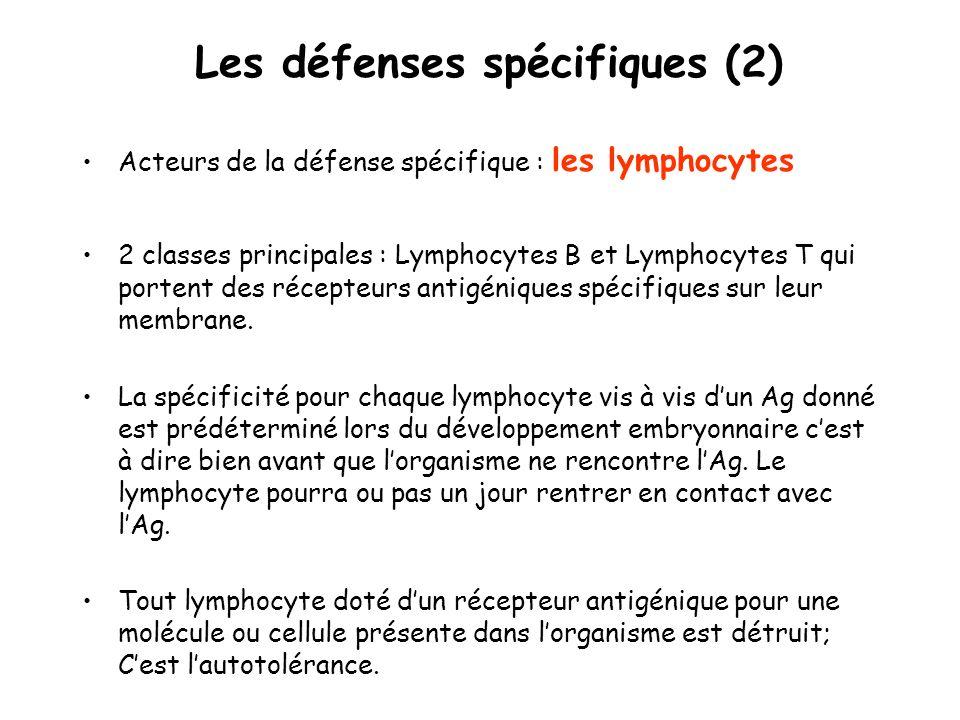 Les défenses spécifiques (2)