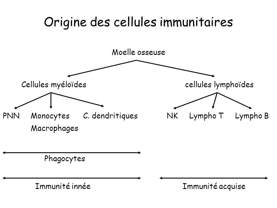 Origine des cellules immunitaires