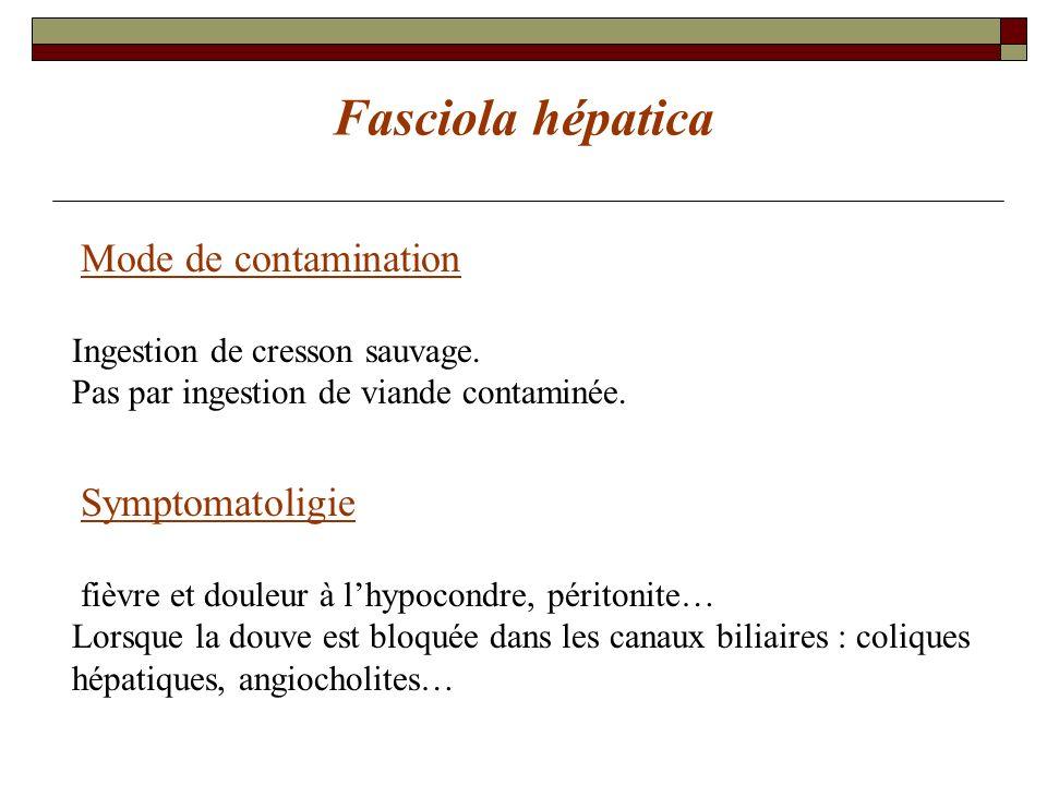 Fasciola hépatica Mode de contamination Symptomatoligie