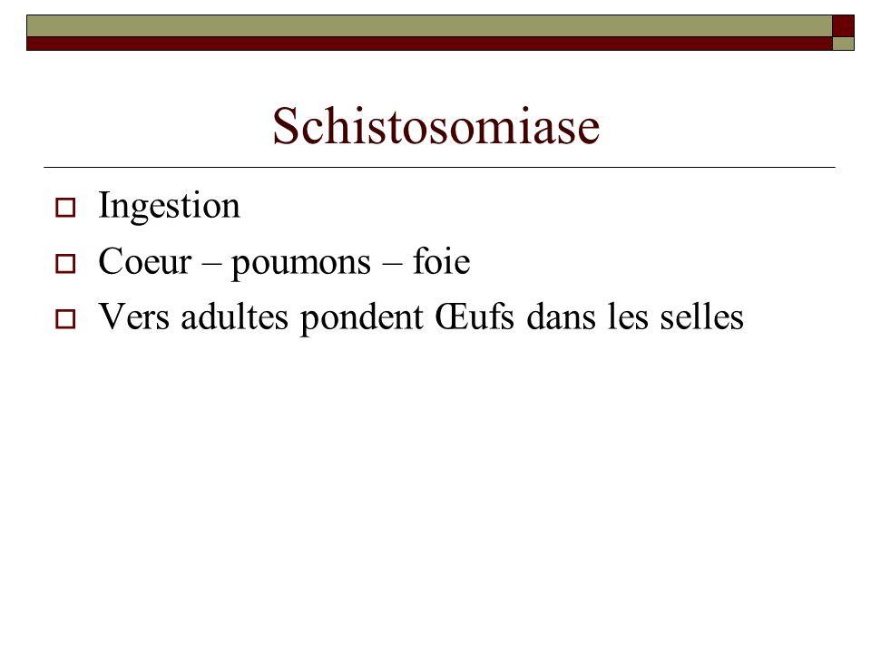Schistosomiase Ingestion Coeur – poumons – foie