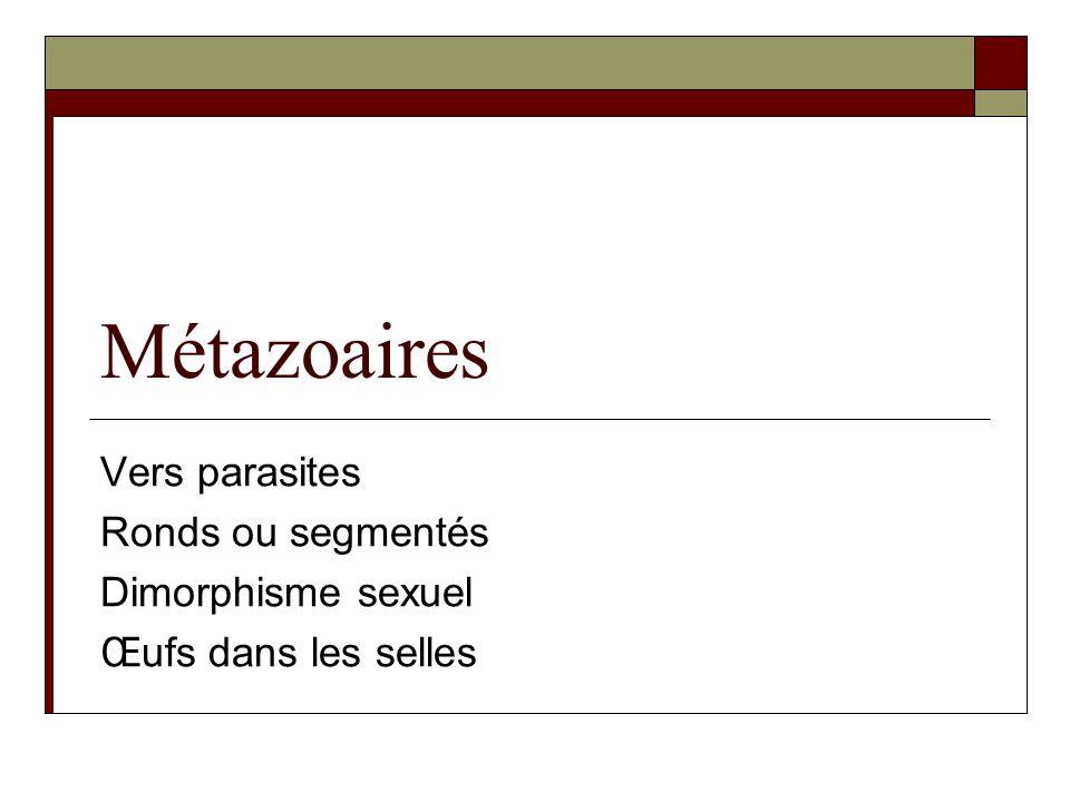 Métazoaires Vers parasites Ronds ou segmentés Dimorphisme sexuel