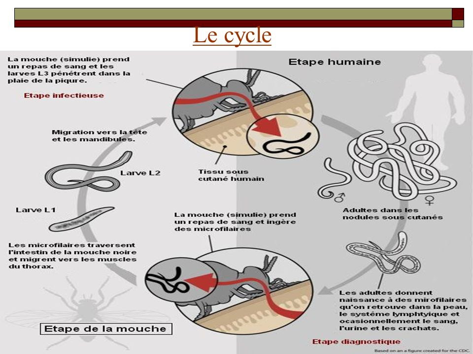Le cycle Le cycle
