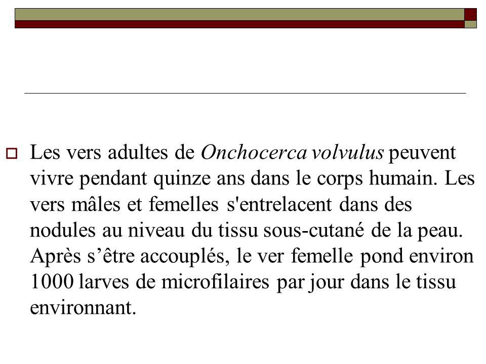 Les vers adultes de Onchocerca volvulus peuvent vivre pendant quinze ans dans le corps humain.