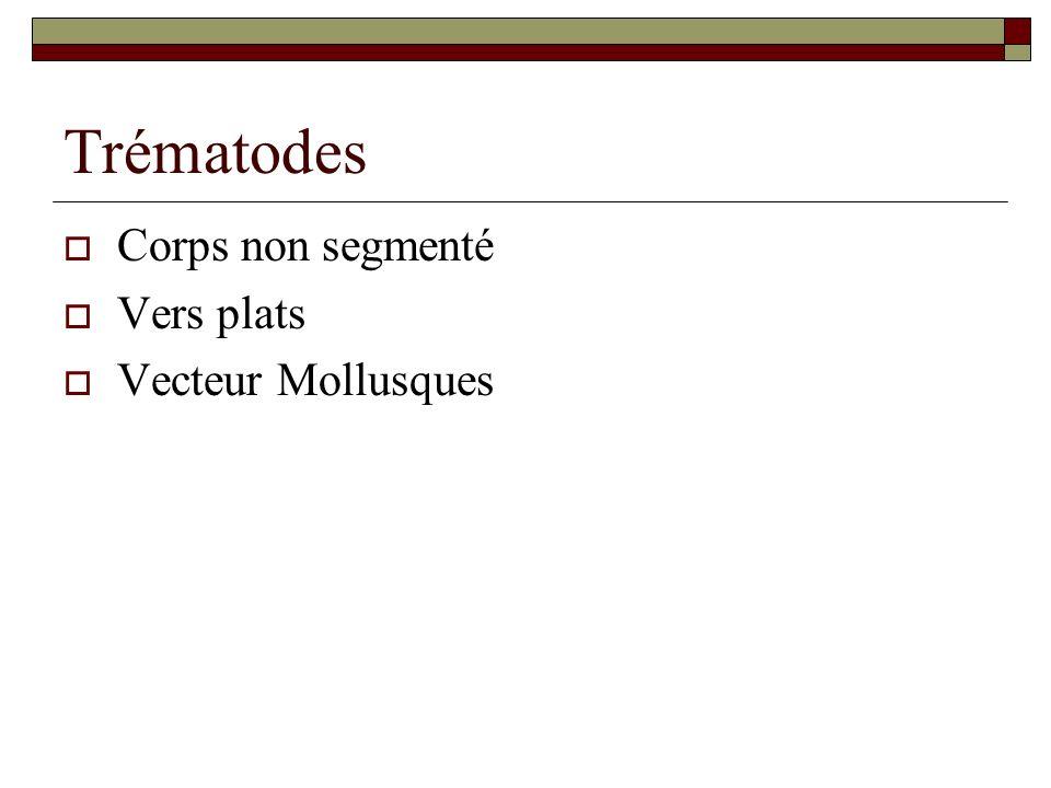 Trématodes Corps non segmenté Vers plats Vecteur Mollusques