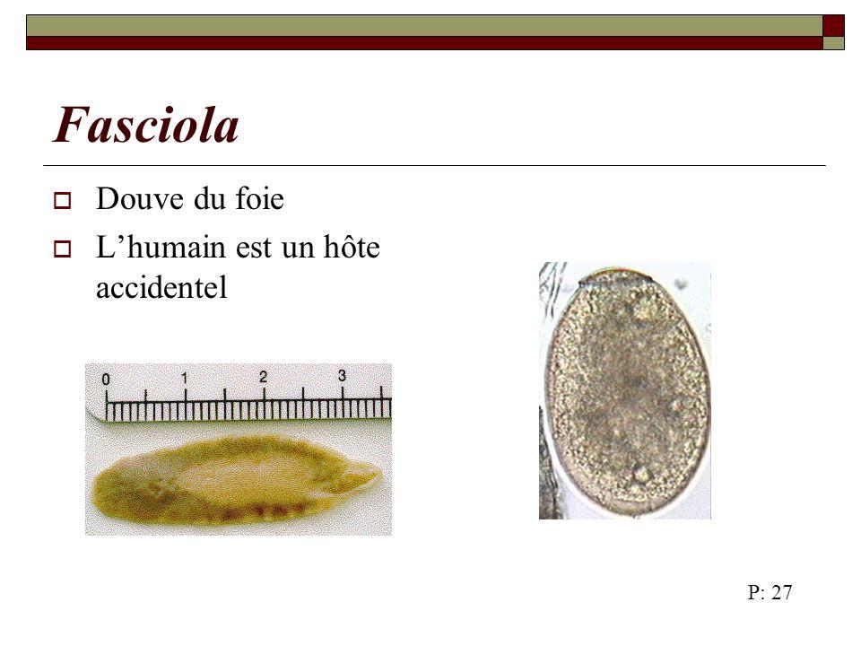 Fasciola Douve du foie L'humain est un hôte accidentel P: 27