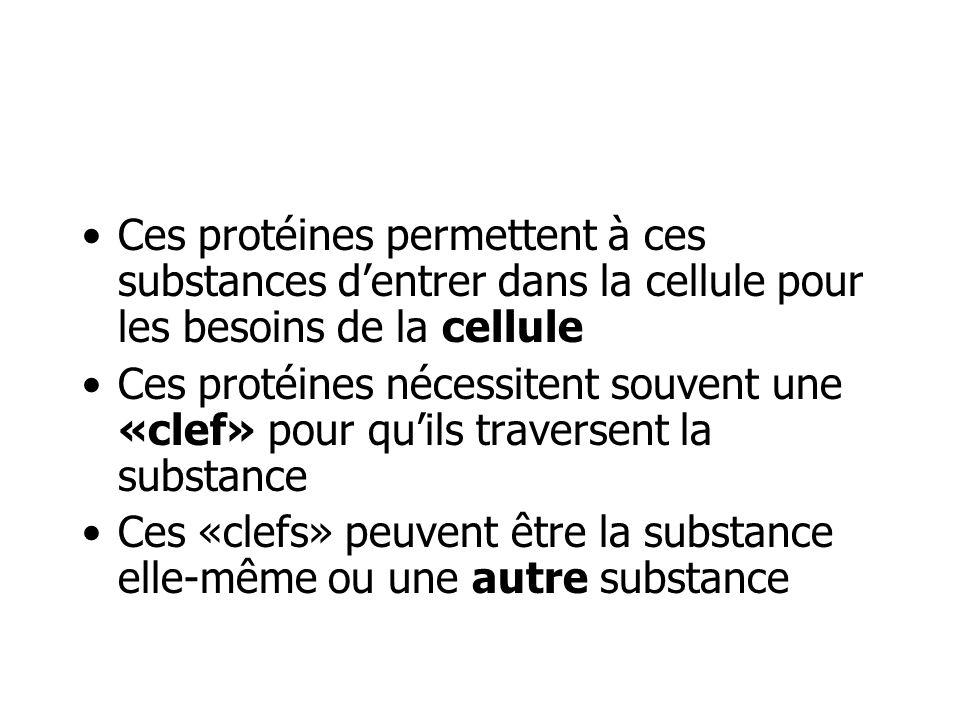 Ces protéines permettent à ces substances d'entrer dans la cellule pour les besoins de la cellule