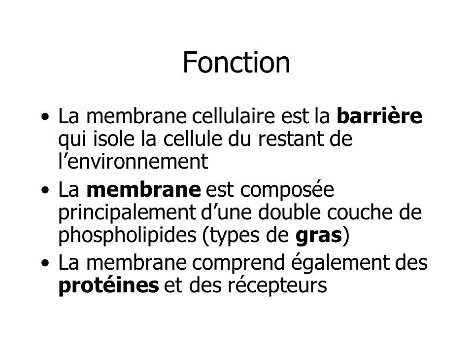 Fonction La membrane cellulaire est la barrière qui isole la cellule du restant de l'environnement.
