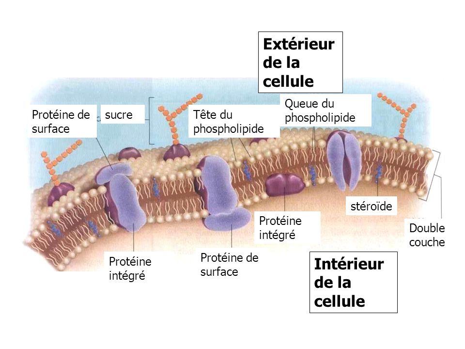 Extérieur de la cellule