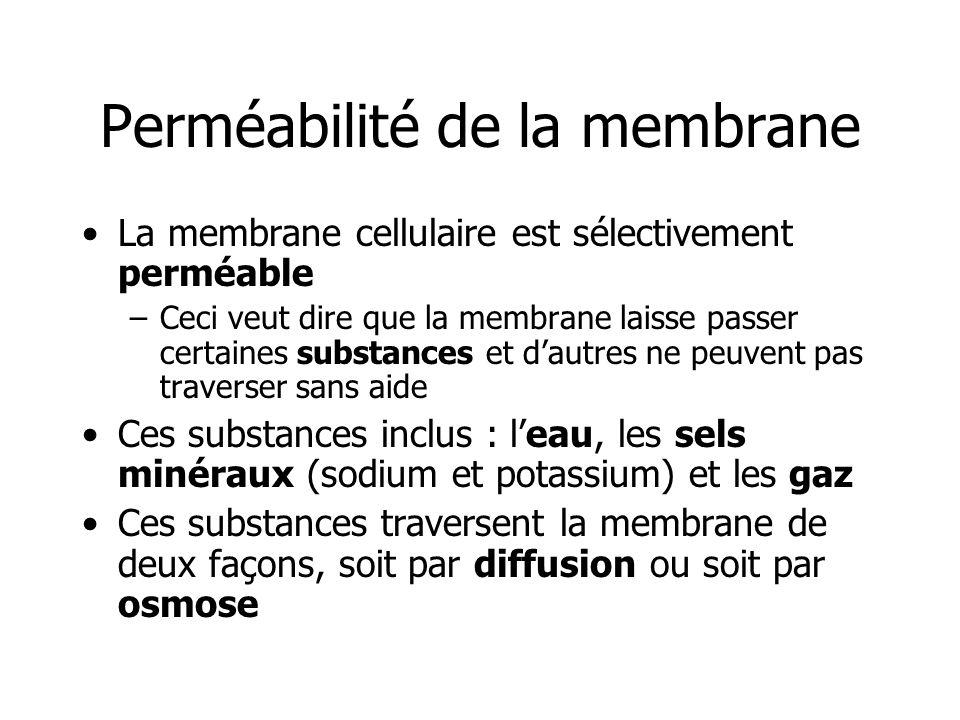 Perméabilité de la membrane