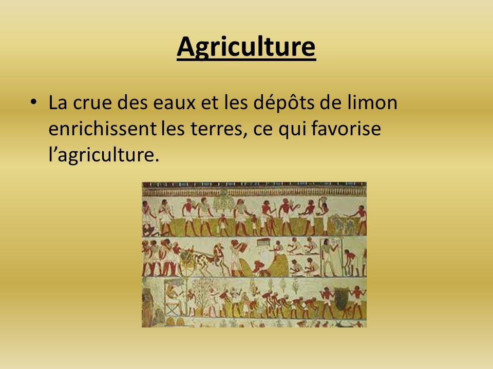 AgricultureLa crue des eaux et les dépôts de limon enrichissent les terres, ce qui favorise l'agriculture.