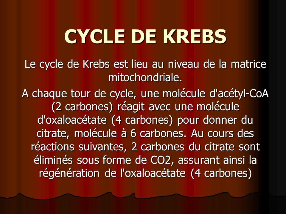 Le cycle de Krebs est lieu au niveau de la matrice mitochondriale.
