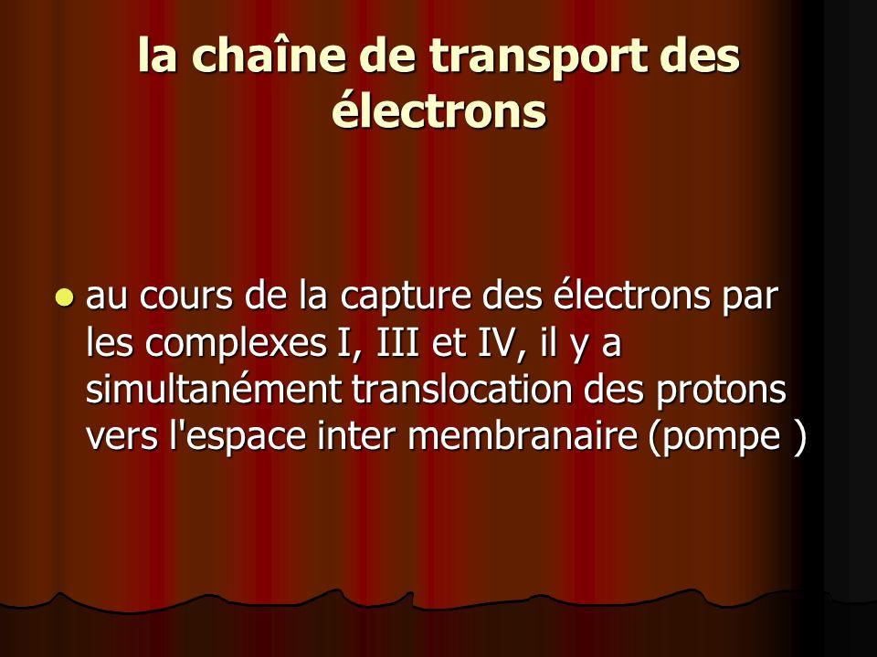 la chaîne de transport des électrons