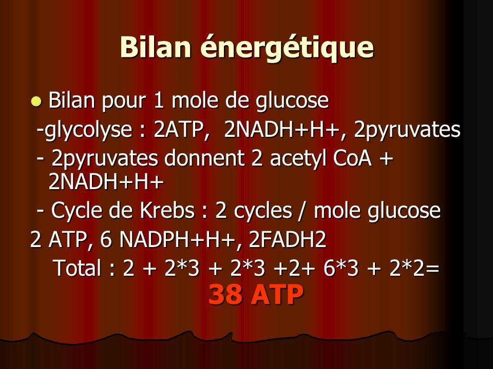 Bilan énergétique Bilan pour 1 mole de glucose