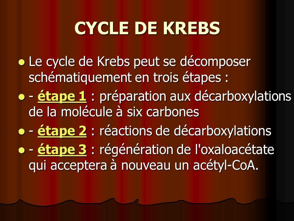 CYCLE DE KREBS Le cycle de Krebs peut se décomposer schématiquement en trois étapes :