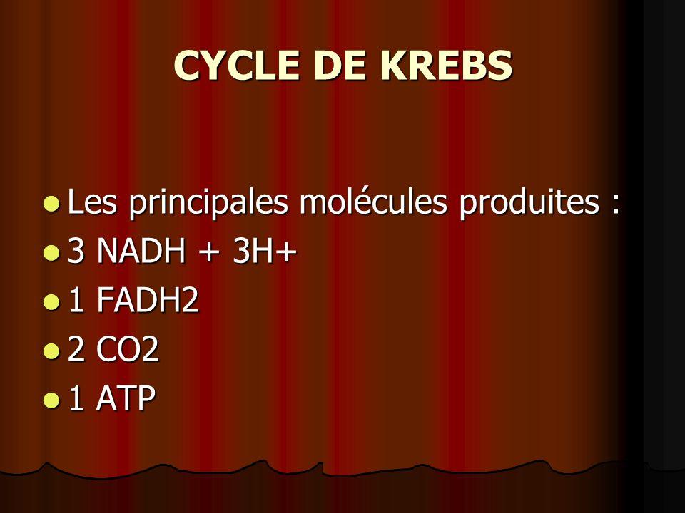 CYCLE DE KREBS Les principales molécules produites : 3 NADH + 3H+