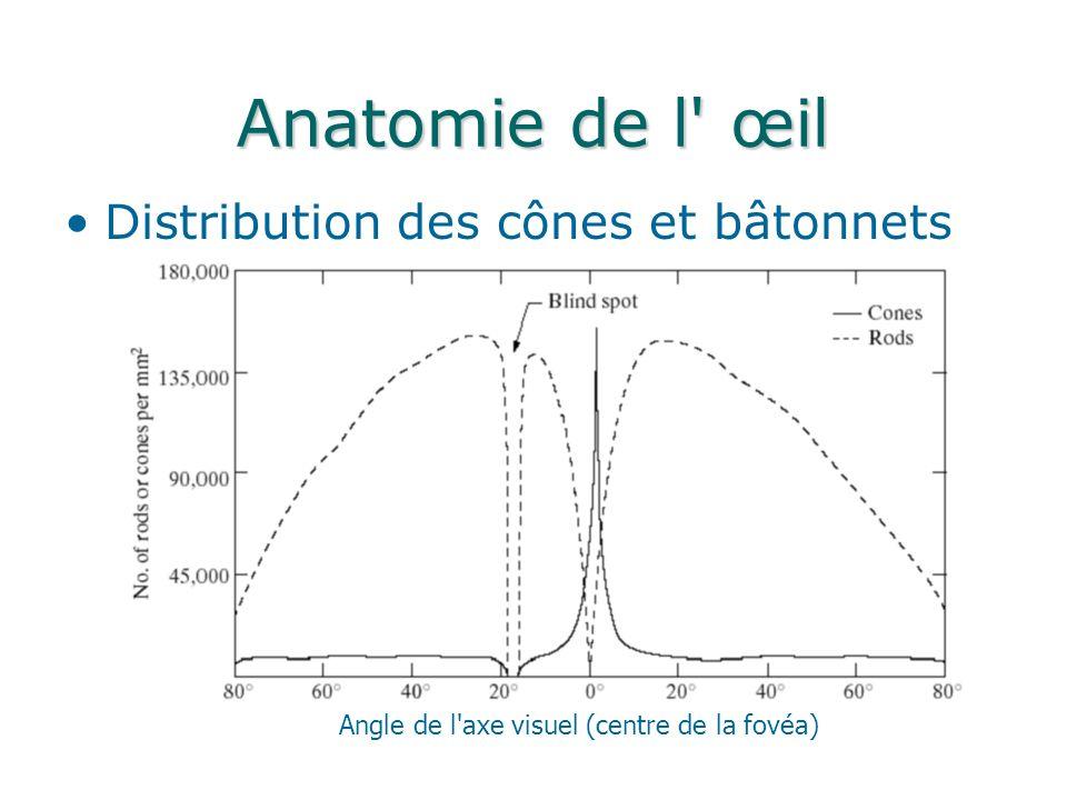 Anatomie de l œil Distribution des cônes et bâtonnets