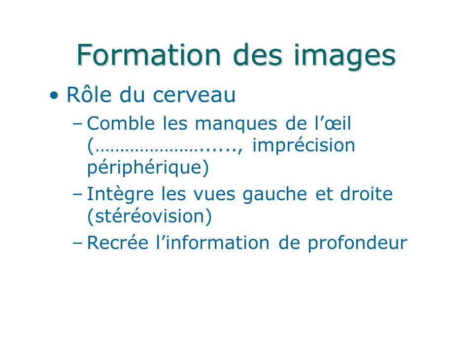 Formation des images Rôle du cerveau
