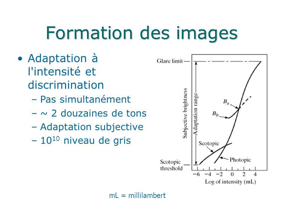 Formation des images Adaptation à l intensité et discrimination