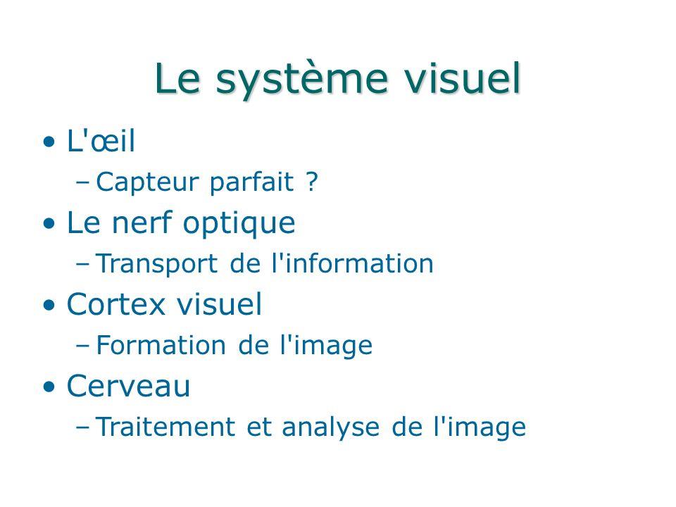 Le système visuel L œil Le nerf optique Cortex visuel Cerveau