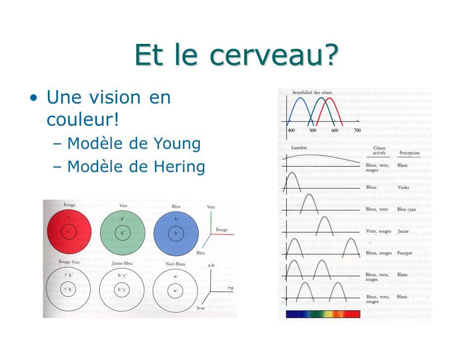Et le cerveau Une vision en couleur! Modèle de Young Modèle de Hering