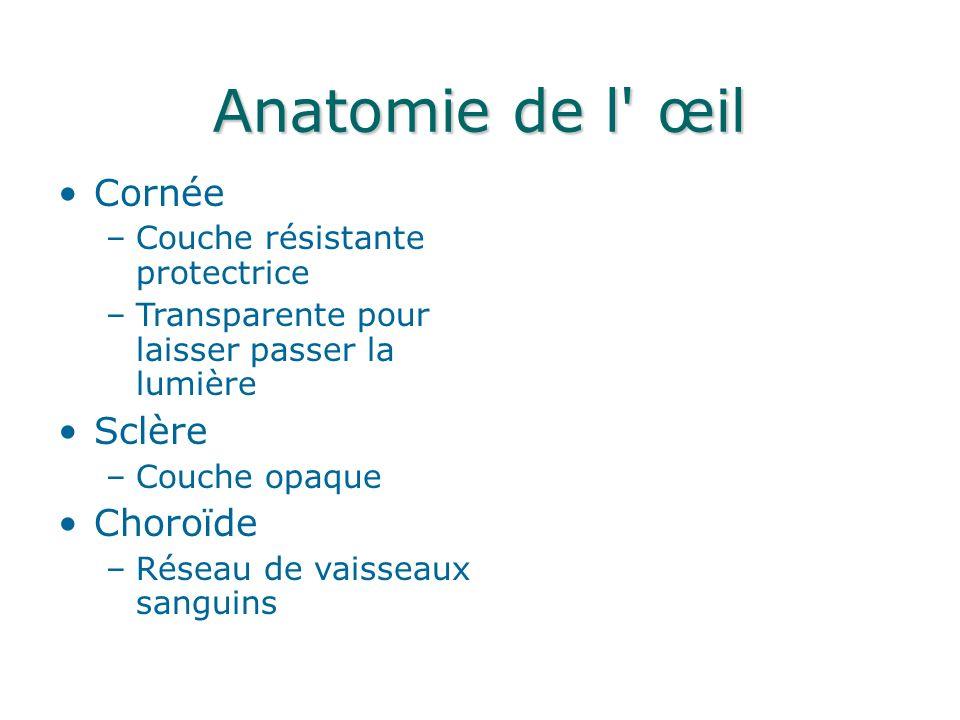 Anatomie de l œil Cornée Sclère Choroïde