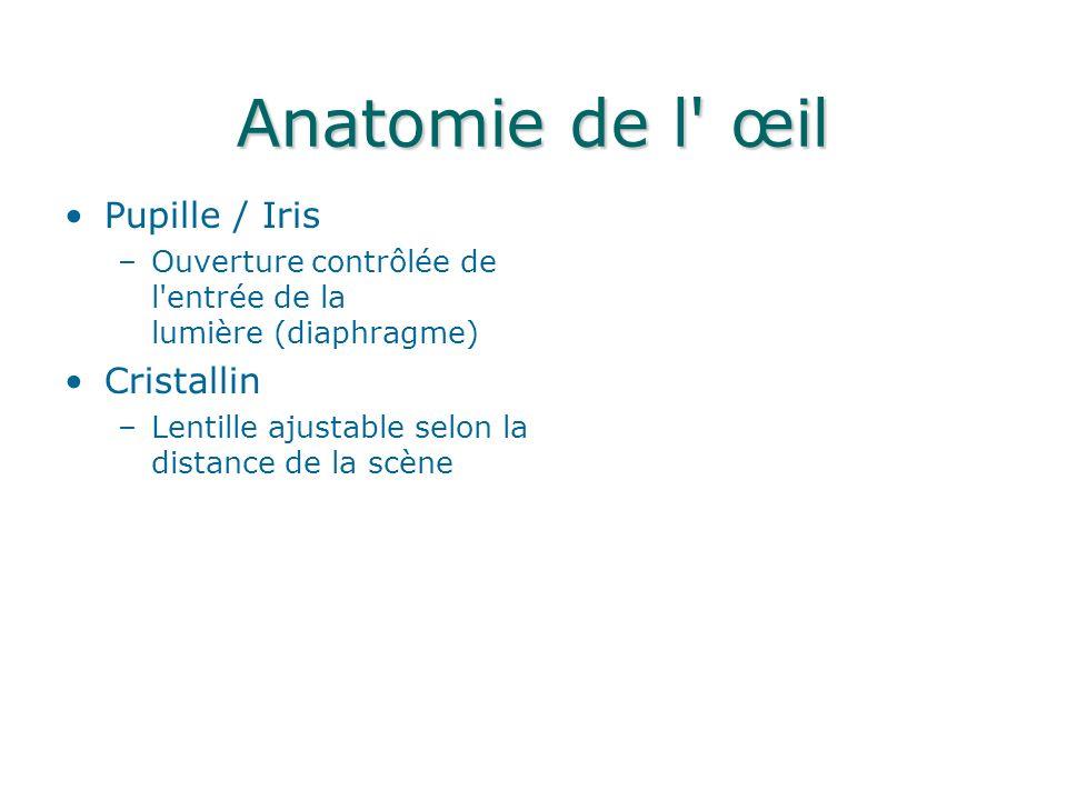 Anatomie de l œil Pupille / Iris Cristallin