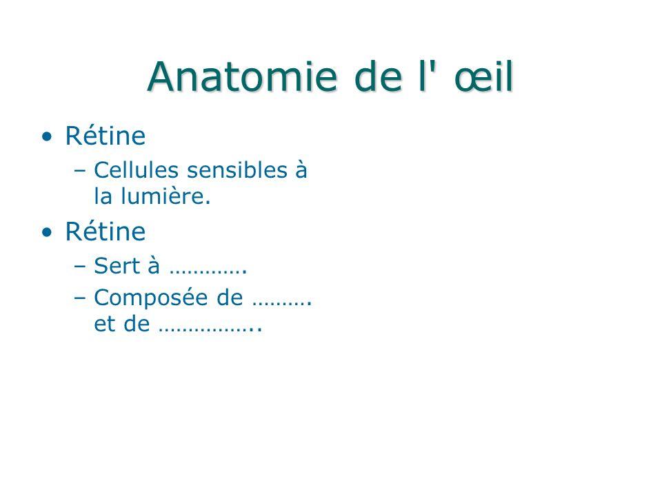 Anatomie de l œil Rétine Cellules sensibles à la lumière.