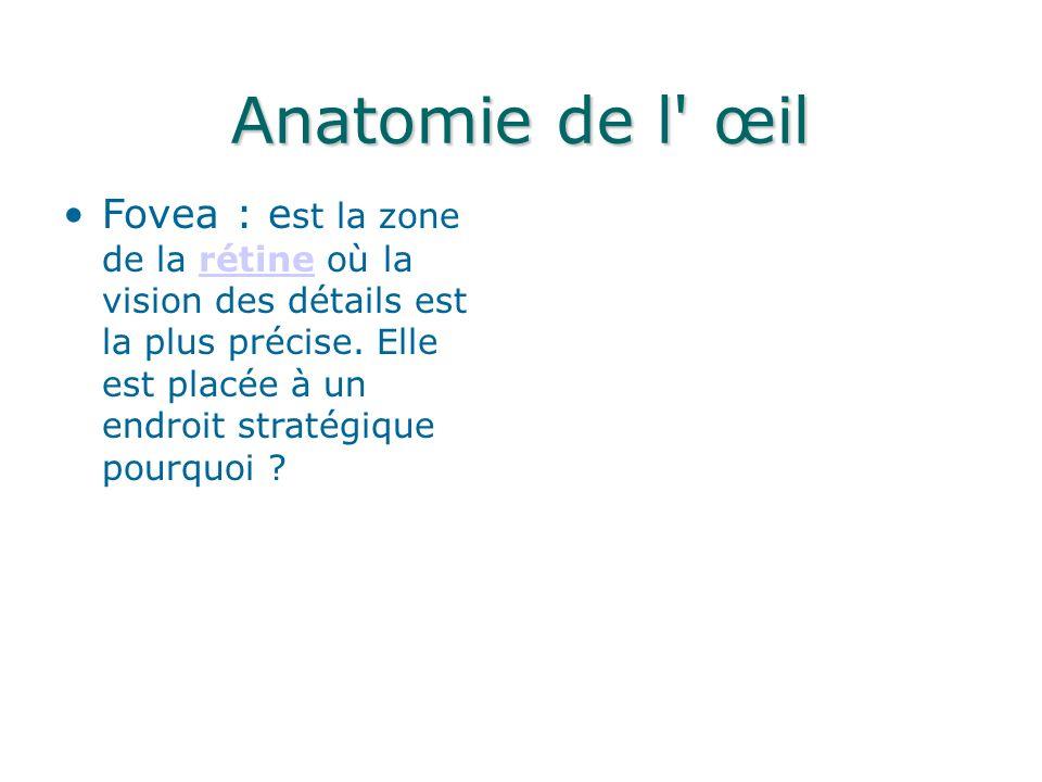 Anatomie de l œil