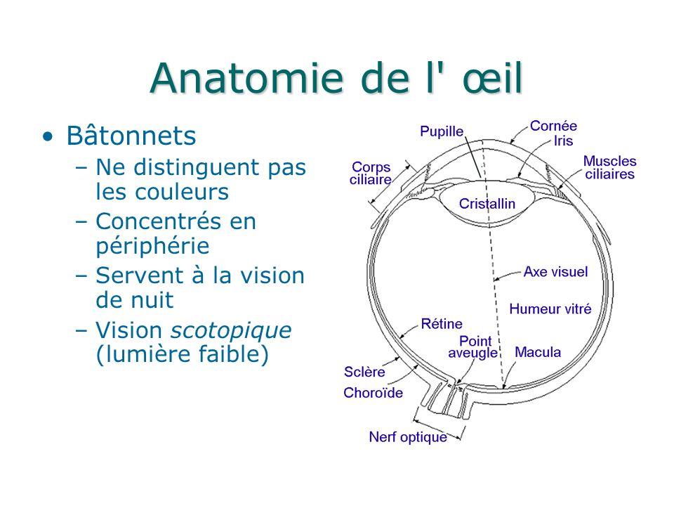 Anatomie de l œil Bâtonnets Ne distinguent pas les couleurs