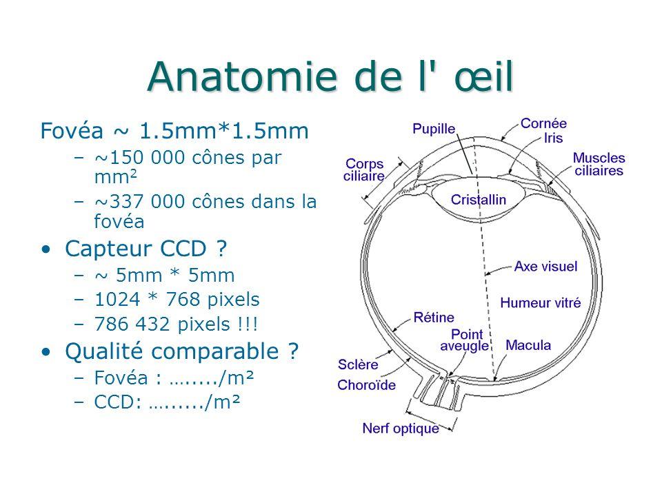 Anatomie de l œil Fovéa ~ 1.5mm*1.5mm Capteur CCD