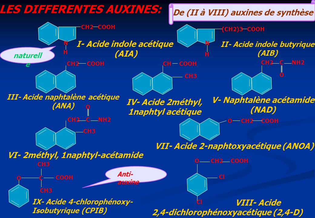 LES DIFFERENTES AUXINES: