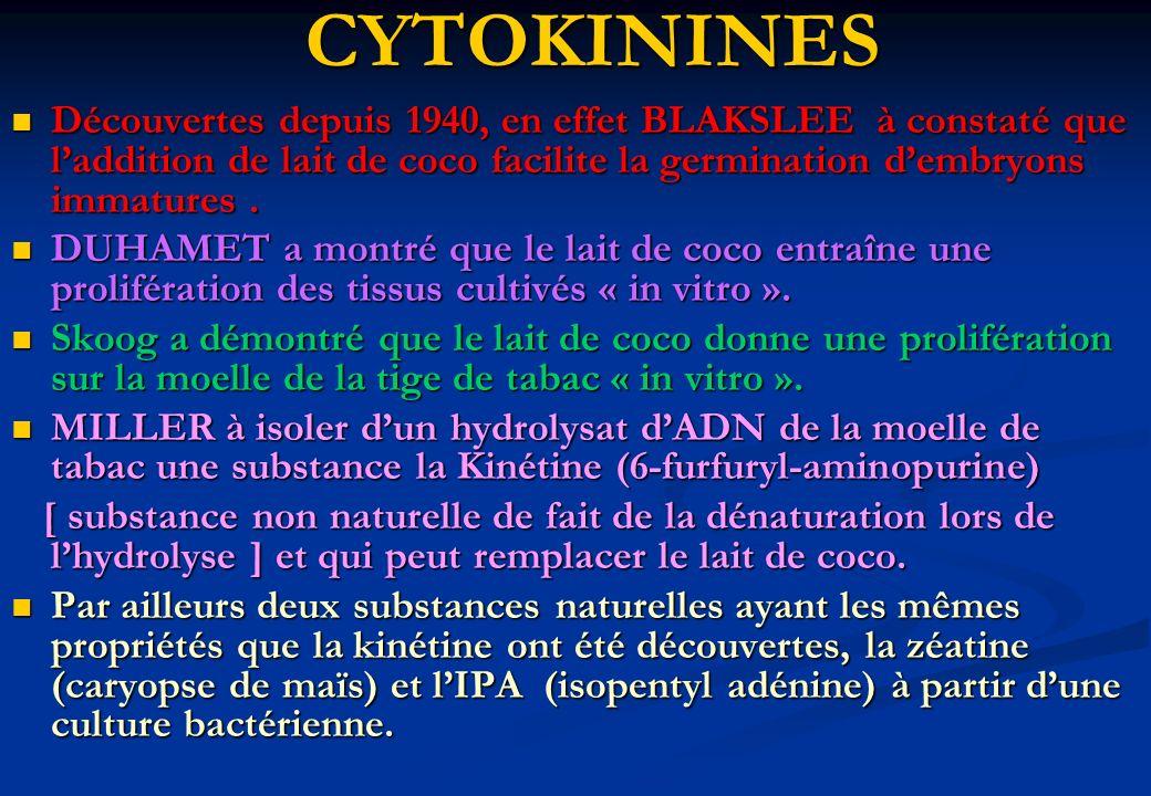 CYTOKININES Découvertes depuis 1940, en effet BLAKSLEE à constaté que l'addition de lait de coco facilite la germination d'embryons immatures .